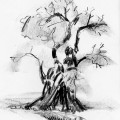 old_oak_tree